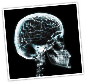 Human-body-brain